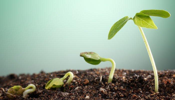 Come far crescere una PMI